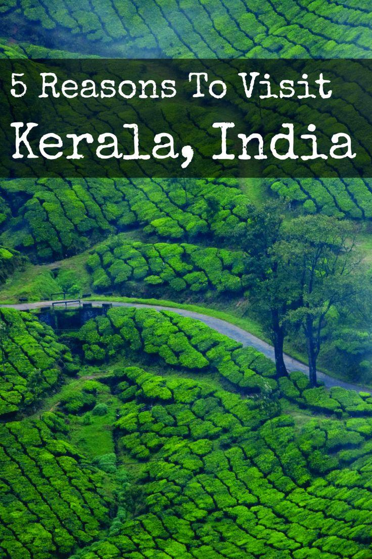 5 Reasons to visit Kerala, India via www.myfoododyssey.com