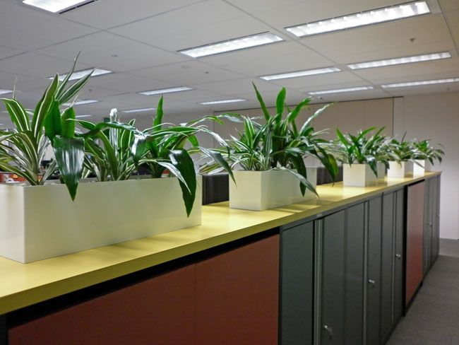 office planter. add a soft touch to the office this mixture and others are available at www planterscan planter n