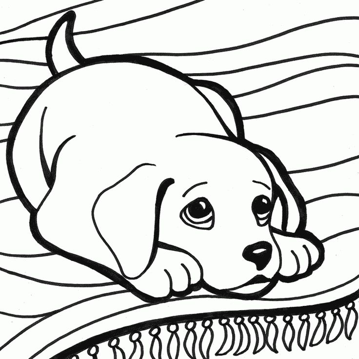 79 best Dibujos animales images on Pinterest | Animales, Apliques y ...