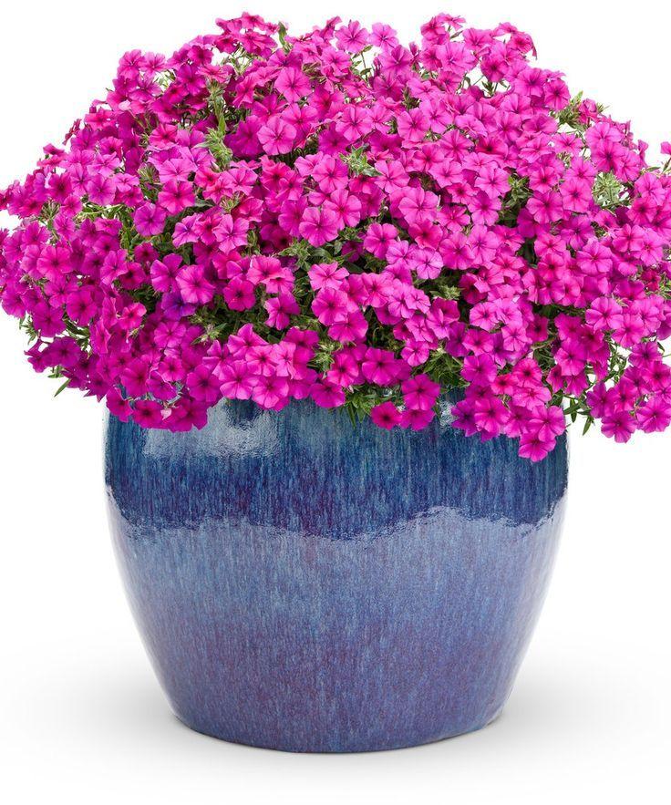 Best 25+ Flowers for hanging baskets ideas on Pinterest | Window ...