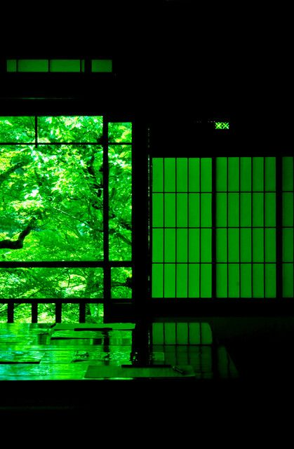 瑠璃光院 Ruriko-in Temple, Kyoto, Japan #Kyoto #Green #緑 #床みどり