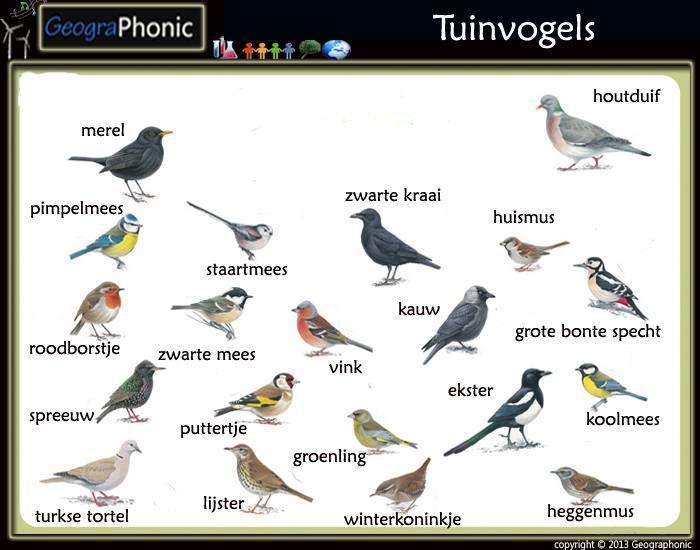 Onwijs Vogels in de tuin (met afbeeldingen)   Vogels, Spreeuw, Houtduif QS-28