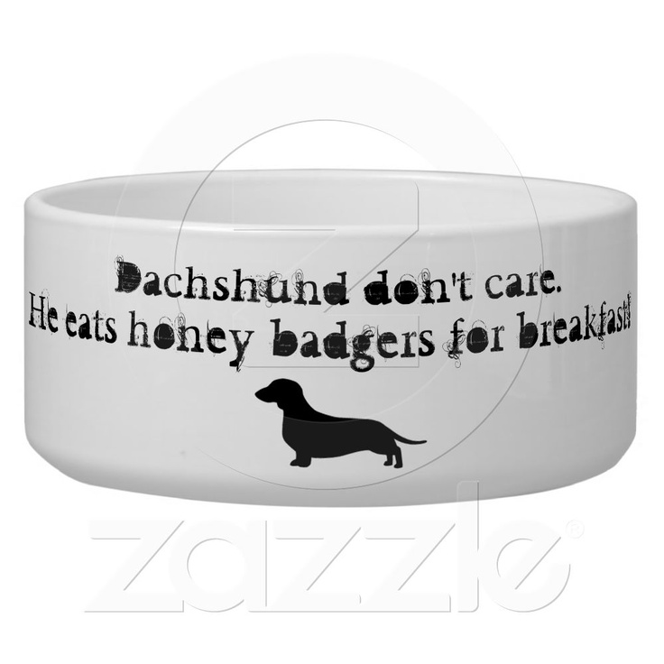 Dachshunds eat honey badgers dog water bowls