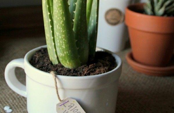zimmerpflanzen bilder gem tliche deko ideen mit topfpflanzen pflanzen pinterest. Black Bedroom Furniture Sets. Home Design Ideas