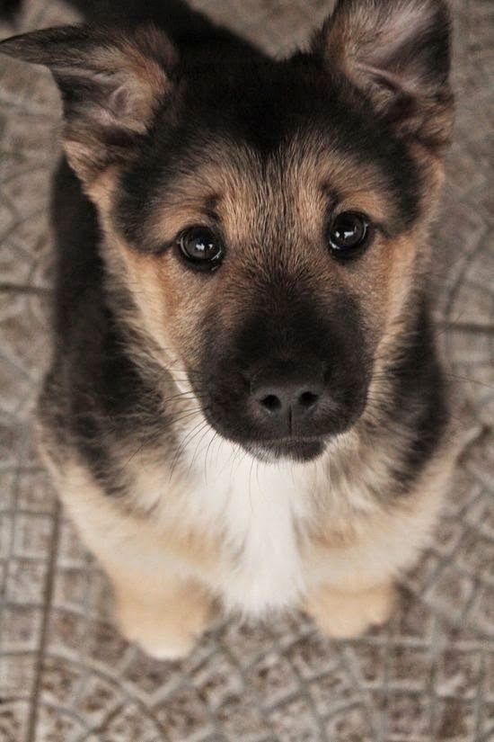 Dog treats please