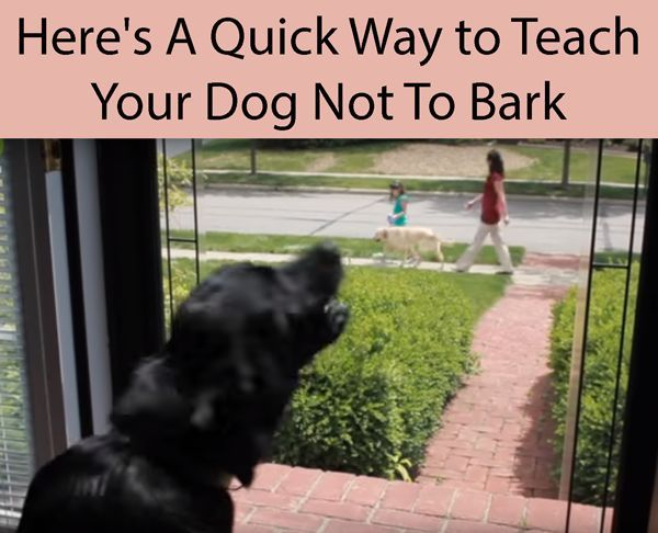 How To Stop A Dog From Barking Training Your Dog Dog Training Dogs