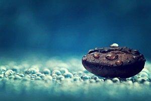 Coffee Bean Water Drops Macro Photo HD Wallpaper
