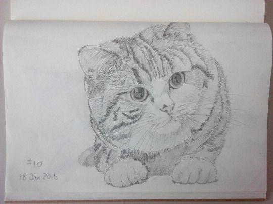 Cat sketching practice #010