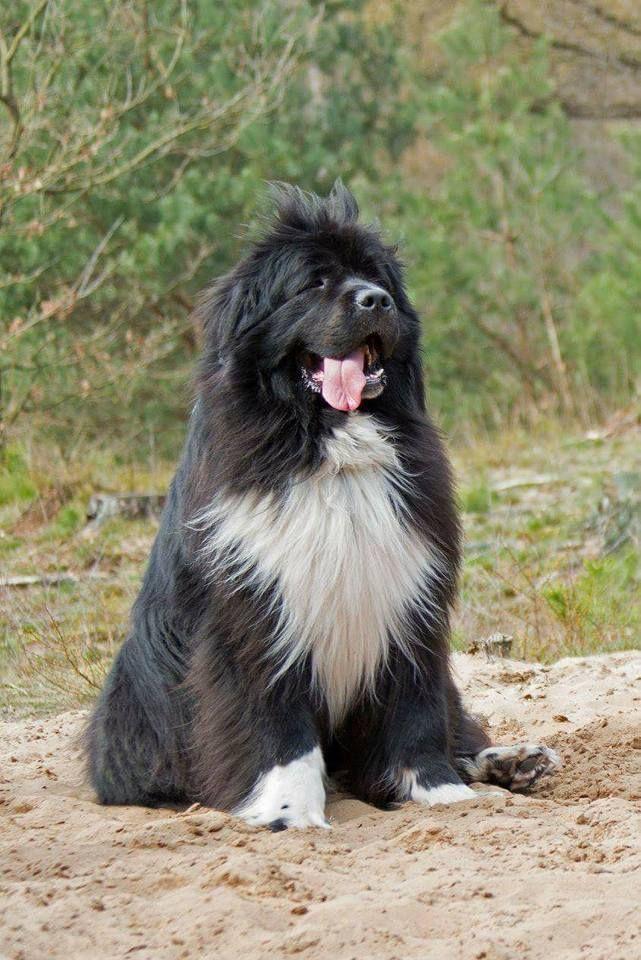 Pin Von Liana Blom Auf Cute Hunde Grosse Hunde Und Hunderassen