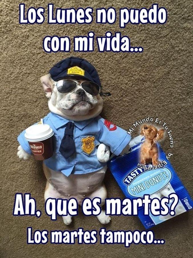 Jajajaja Fraces De Buenos Dias Buenos Dias Buenas Tardes Memes