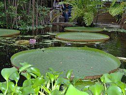 Hortus botanicus Leiden - Wikipedia