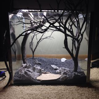 A freshwater aquarium doesn't have to just be a home for fish.  It can also be a canvas for a form of art if you want it to be.   That form of art is called...