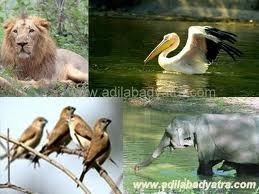 Kawal Wildlife Sanctuary: Area of the park is 893 Square Kms, and special thing is teak forest and diverse types of deer's. The Bamboo, Pterocarpus, Terminalia, Anogeisus and Cassias are few unique trees and plants available in this forest. Wild animals like Tiger, Gaur, Panther, Cheetal, Nilgai, Sambar, Deer, Mouse Deer, Chowsingha, Sloth Bear, etc. Distance of sanctuary is only 50 kms from the station. Season period is from November to May.