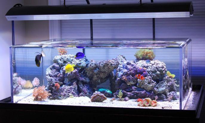 ZeroEdge Aquarium Classic 80