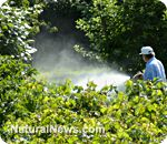 Study: Roundup diluted by 99.8 percent still destroys human DNA