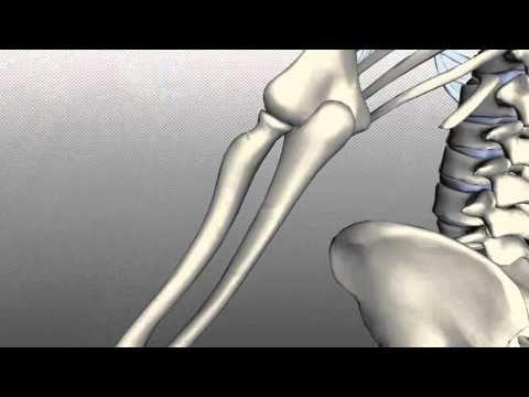 Radius and Ulna - Anatomy Tutorial