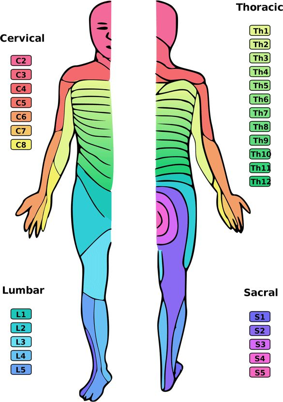 13 best Dermatomas images on Pinterest | Massage, Health and ...