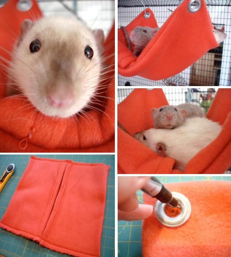 totally need to make this...my rats ALWAYS tear their hammock up whether store-bought or from old sweatshirts