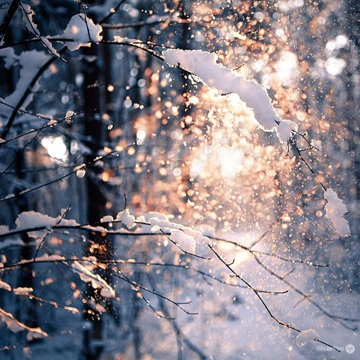 The quiet sparkle of newly fallen snow decorating the surrounding trees and covering the landscape.