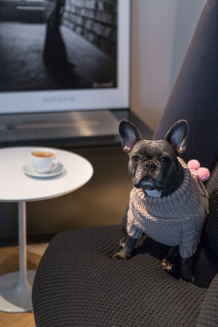 #interior #session #dog #design #photography #studio #absynt #studioabsynt #brodziak