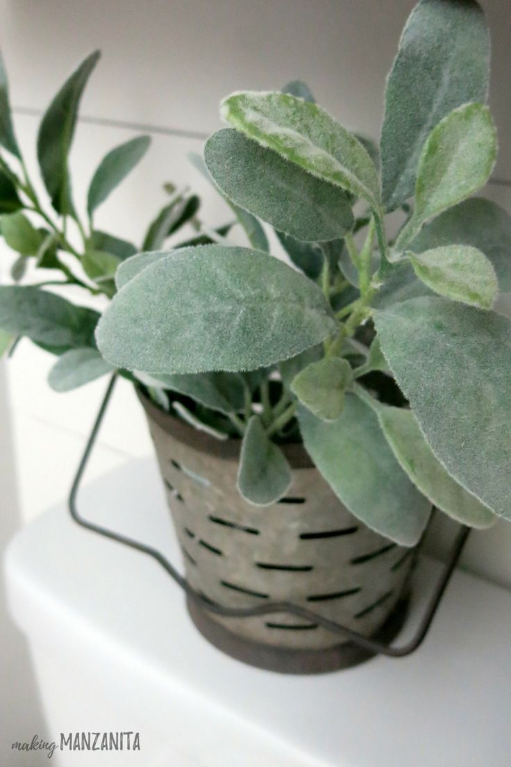 Lambs ear in vintage olive bucket on top of toilet | How to decorate on top of toilet back | Decorate back of toilet | Toilet seat decorations | Bring faux greenery into farmhouse bathroom
