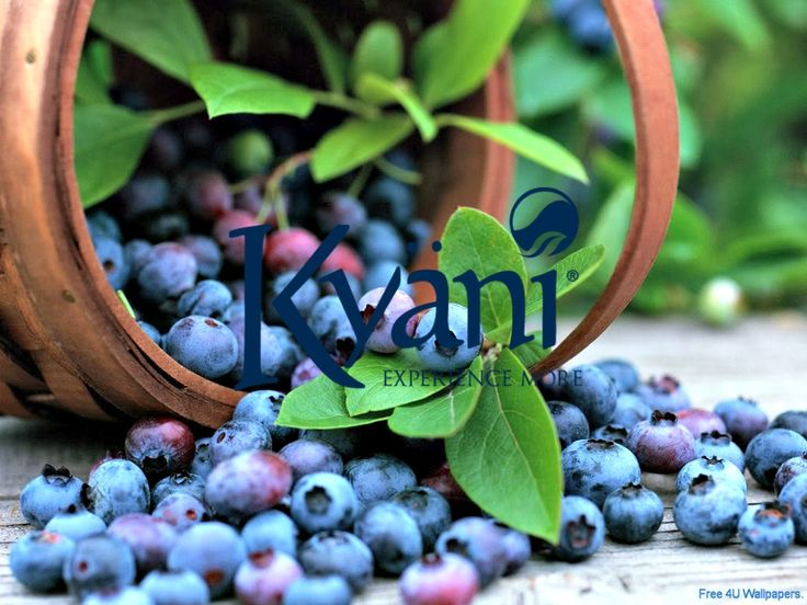 Health? Wealth? Life-changing? The answer is Kyani. Learn more at behealed.kyani.net #livehealthy #livewealthy