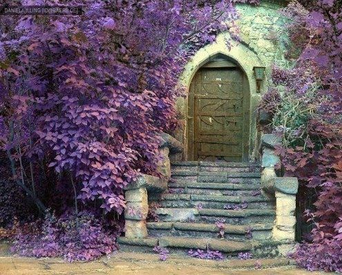 Surrounded by purple.: The Doors, Secret Gardens, Fairies Doors, Front Doors, Gardens Doors, Secret Doors, Old Doors, Fairies Tales, Purple Flower