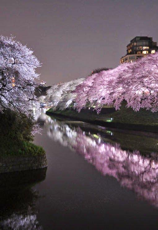 Chidorigafuchi Japan