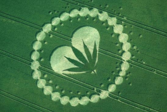 """""""Crop"""" Circle, aliens seem to know of the sacred herb..."""