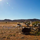 Cockatoos in the Outback by darkydoors