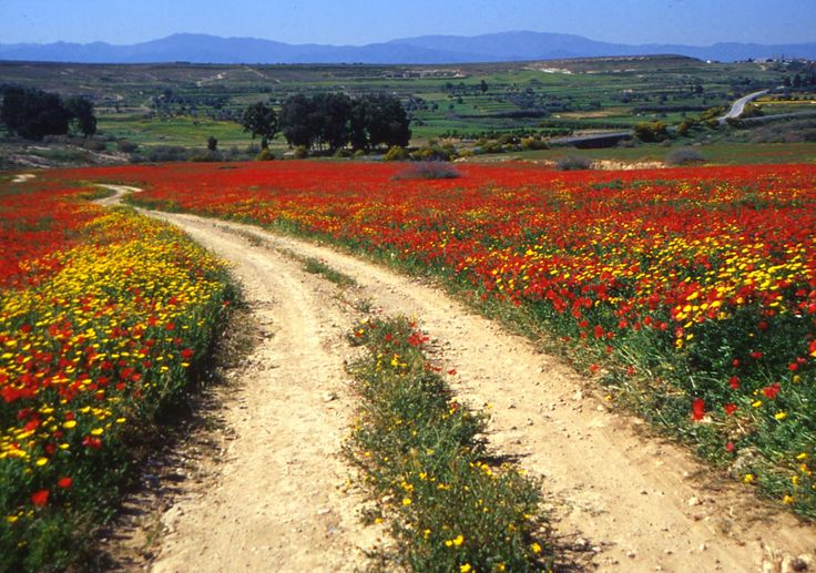 Beautiful spring flowers, Cyprus