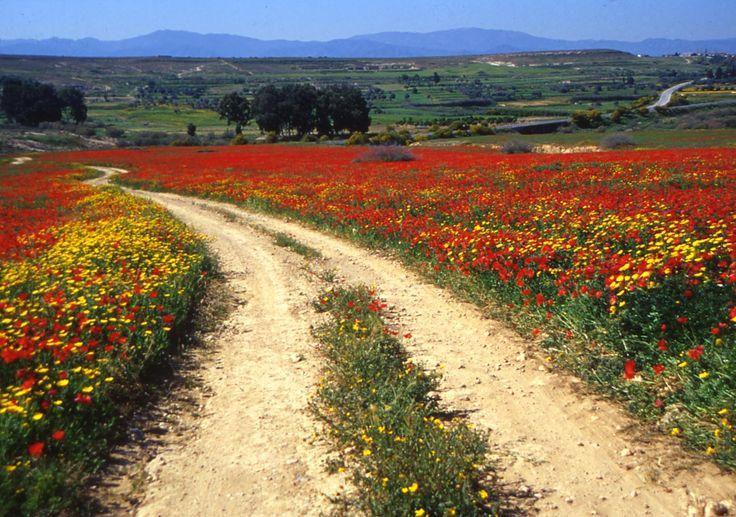 Beautiful spring flowers, Cyprus