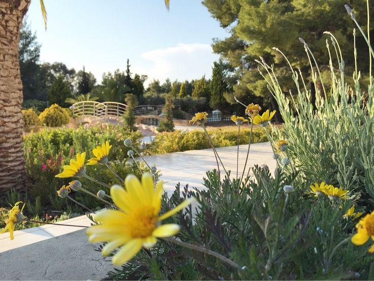 Good Morning from Halkidiki and @portocarras Meliton Hotel!   #Booknow your holiday:  http://portocarras.reserve-online.net/   #PortoCarras #MelitonHotel #spring #flowers #Halkidiki #Sithonia #santinxalkidikidenexei #visithalkidiki #visitgreece #travelling #goodmorning #MondayMood