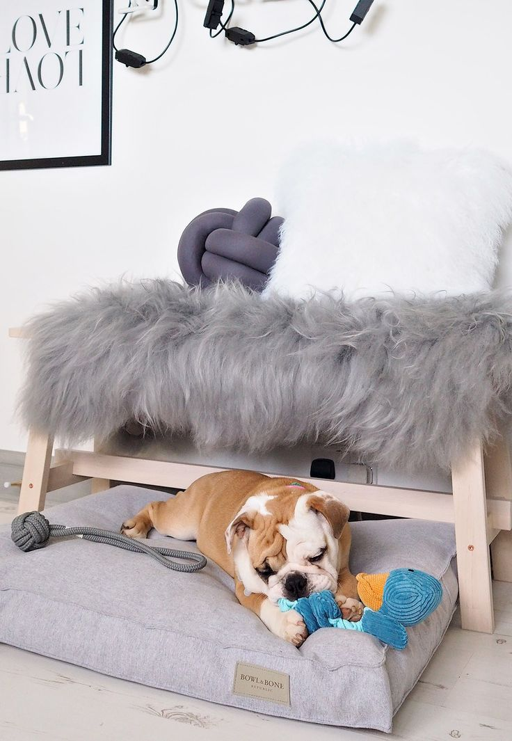 17 best Lust Living - Four legged images on Pinterest | Dog beds and ...