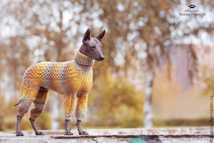 Купить комбинезон для собаки - оливковый, Свитер для собак, свитер для собаки, одежда для собак, одежда для ксоло