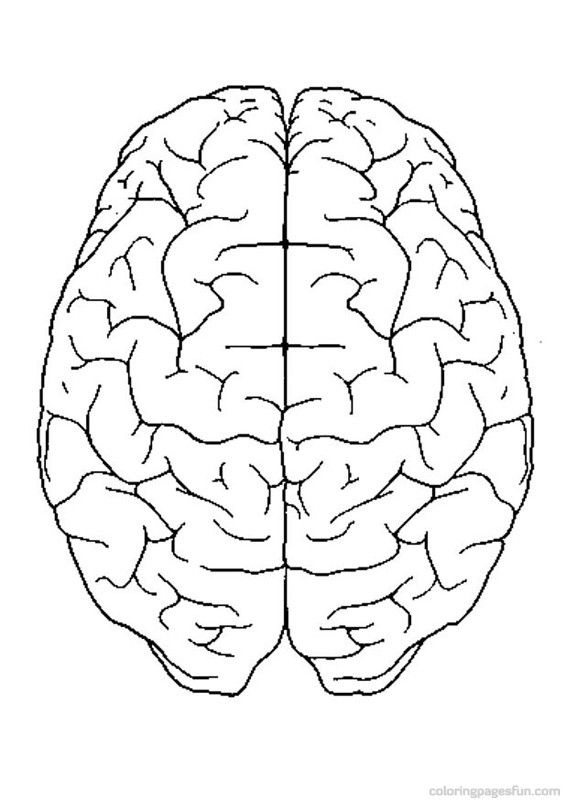 The Human Body Brain Coloring Page
