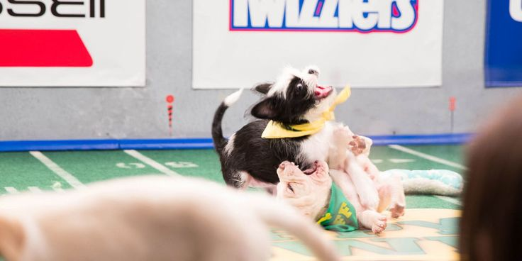 Puppy Bowl - Animal Planet Puppy Bowl - Country Living