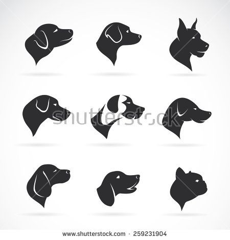 Vector image of an dog head on white background,  Vector dog head for your design.