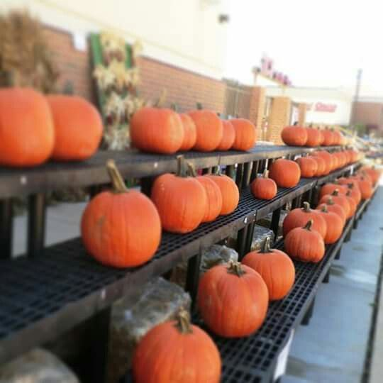 2014.09: Pumpkin at Ace Hardware Store, Chicago