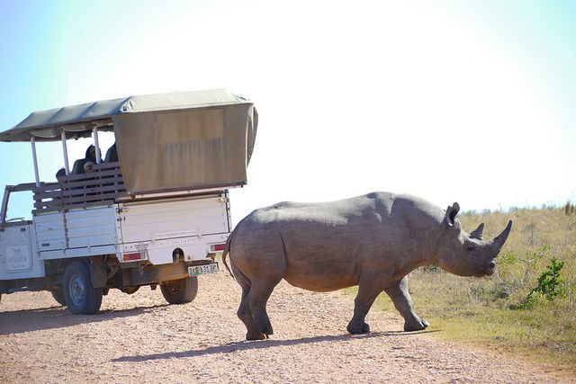 Rhino and Car