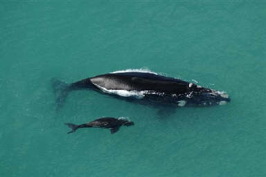 Watching whales from the air. One of nature's novelties in South Africa.