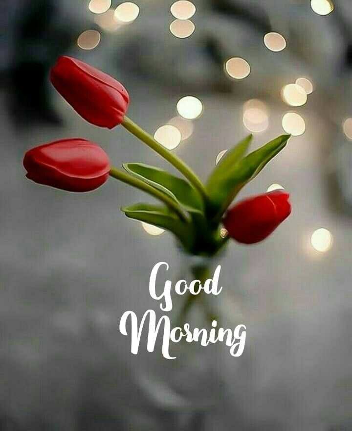 Good Morning Good Morning Roses Good Morning Flowers Quotes Good Morning Monday Images