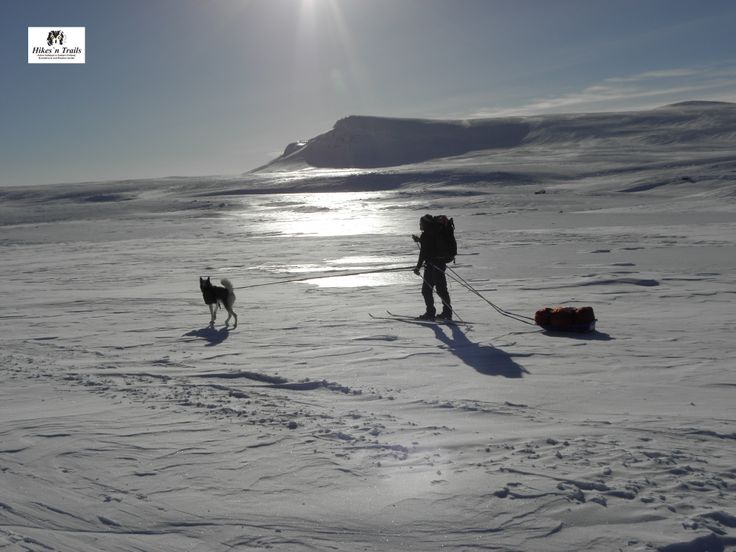 Ice, snow, ice. Skiing with a dog in Lapland.