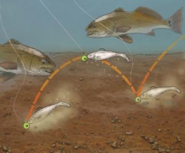 Top Techniques For Gulf Redfish   Salt Water Sportsman