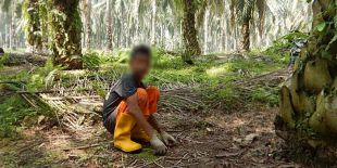 PETITION: Protect Rainforest Wildlife and Stop the Use of Child Labor for Conflict Palm Oil