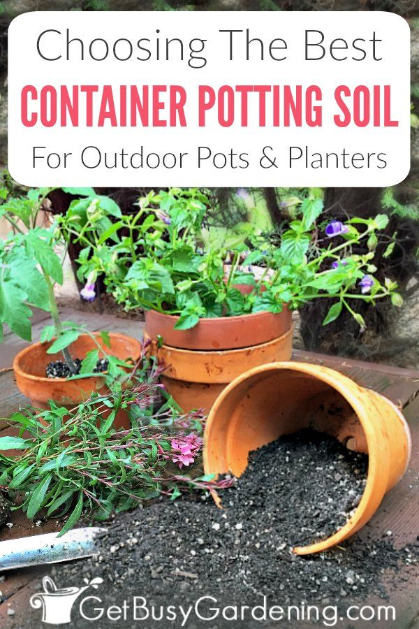 Outdoor Potted Plants Depend On Us To Provide The Nutrients They Need To Grow That S Potted Plants Outdoor Container Gardening Vegetables Container Gardening