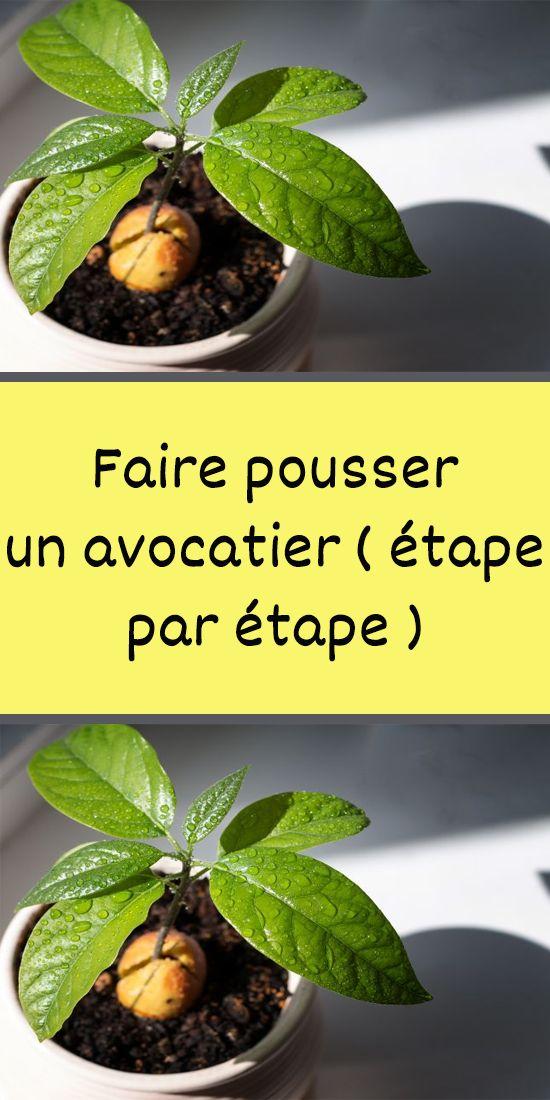 Comment planter un figuier - ledrivedesfermiers.fr