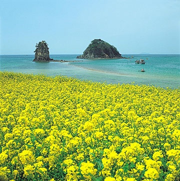 Jeju Island or Cheju is located at Korea Strait Southwest of Jeollanam-do Province and Jeju City as it capital city. Jeju has subtropic area with warm air and rare snow fall during winter.    Why is it often called Bali in Korea? Because it has very beautiful scenery view, like in Bali. Jeju has many tourist attractions, one of them is Halla Mountain. Halla Mountain is the highest mountain in South Korea. Around Halla Mountain there are many blooming yellow flowers.
