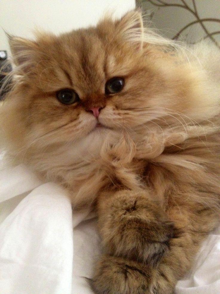 349 best Orange Cats - My Favorite images on Pinterest ...