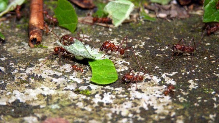 Hormigas trabajando by Elbisnet - Elbis Bonilla  on 500px